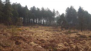 Scenery from Dorset Ooser