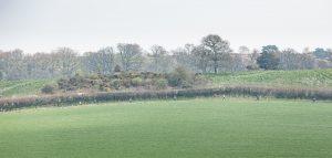 Wide shot of Dorset Ooser
