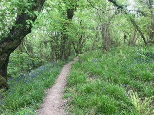 Forest tracks in the Helltone Marathon